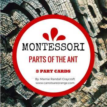 Montessori Parts of the Ant 3 Part Cards