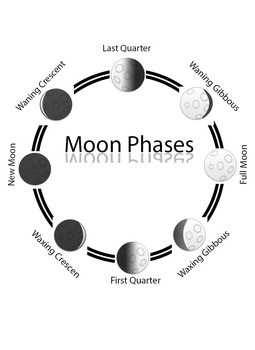 Montessori Phases Of The Moon 3 part cards(FREEBIE)