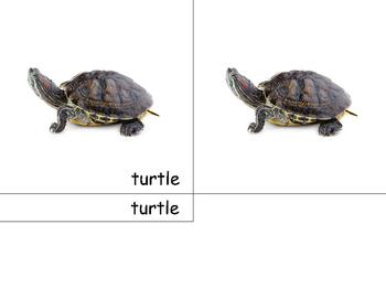 Montessori Turtle- 3 part cards