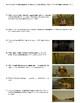 Moonrise Kingdom Film (2012) Study Guide Movie Packet