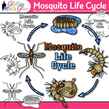 Mosquito Life Cycle Clip Art {Great for Animal Groups, Ins