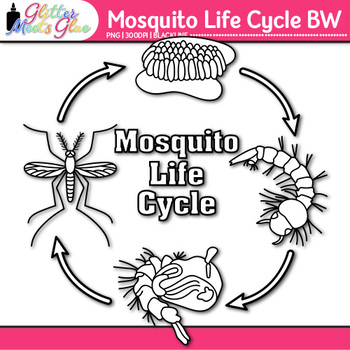 Mosquito Life Cycle Clip Art {Great for Animal Group, Inse
