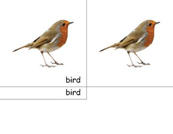 Motessori bird- 3 part cards
