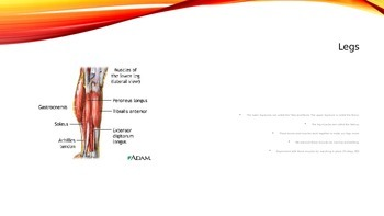 Muscle Groups PPT