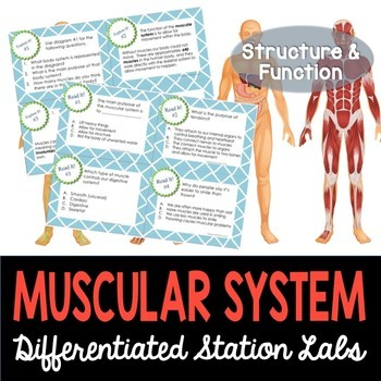 Muscular System Student-Led Station Lab
