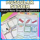 Muscular System Doodle Notes Review Activity
