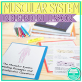 Muscular System: Independent Study Set
