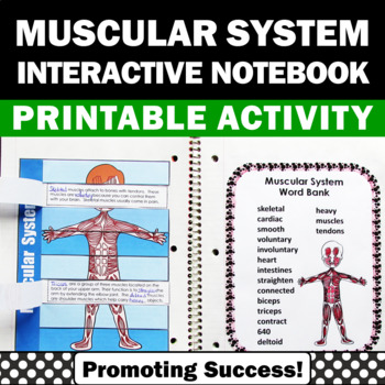 muscular system human body craftivity interactive notebook