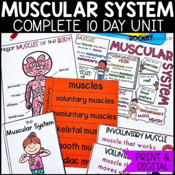 Muscular System: Mini-unit including functions, types of m