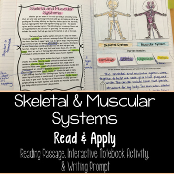 Muscular and Skeletal Systems Reading Comprehension Intera