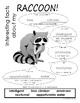 My All About Raccoon Book / Workbook - (Forest / Woodland