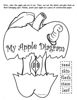 My Apple Diagram FREE