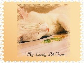 My Lovely Pet Oscar