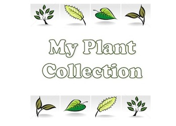 My Plant Collection
