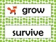 NGSS 1st Grade Science Vocabulary Cards: Structure & Funct