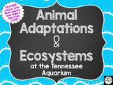 NO-PREP Animal Adaptations & Ecosystems Lesson-3rd, 4th, 5