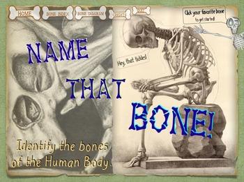 Skeletal System - Name That Bone Tutorial