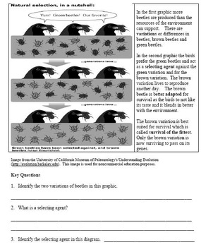 Natural Selection Common Core Reading and Writing Activity