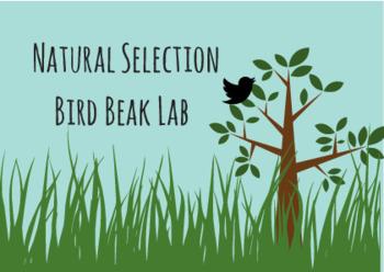 Natural Selection Evolution bird beak activity