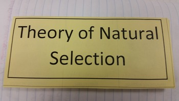 Natural Selection Tri-Fold Graphic Organizer