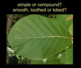 Needle and Leaf Identification PowerPoint