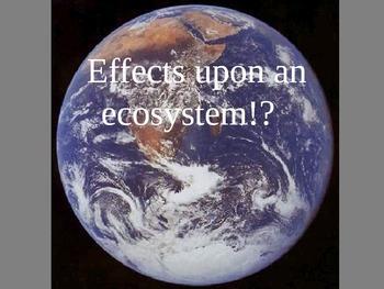 Negative Effects on the Ecosystem Cloze
