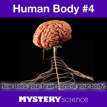 Human Body NGSS:Nervous System ❤ BUNDLE:Activity, Reading,