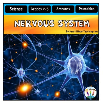 The Human Body - Nervous System - Our Brains, Nerves, Refl