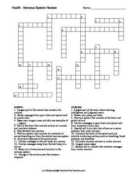 Nervous System: Crossword Puzzle