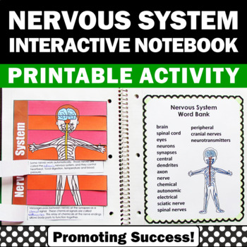 nervous system human body activities 5th 6th grade kids