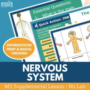 Nervous System - Supplemental Lesson - No Lab