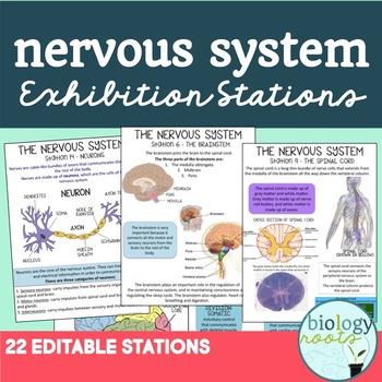 Nervous System Task Cards