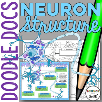 Neuron Structure Graphic Organizer for Interactive Noteboo
