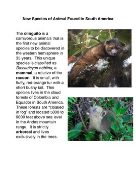 New Species of Animal Found in South America