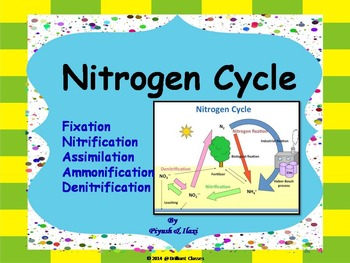 Nitrogen Cycle -  Describing whole cycle processes with hu
