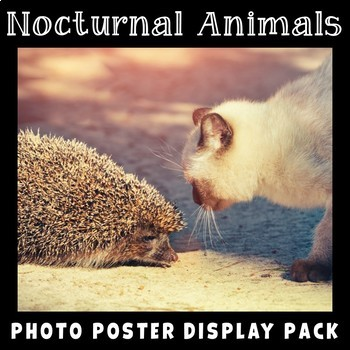 Nocturnal Animals Photo Poster Display Pack