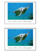 Nonfiction Beginning Reader Printable Book - Ocean