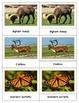Animals of North America: Three Part Cards