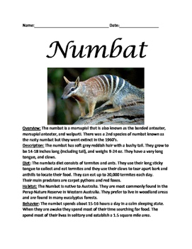 Numbat - marsupial informational article lesson facts ques