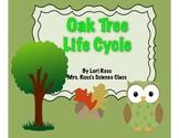 Oak Tree Life Cycle