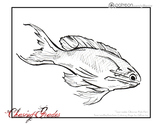 Obama Fish - Coloring Page