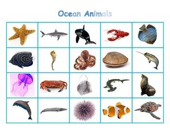 Ocean Animal Matcing