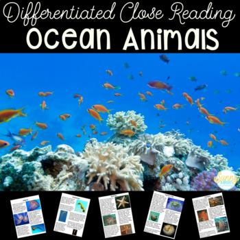 Ocean Animals- Nonfiction Close Read Unit- Common Core Aligned