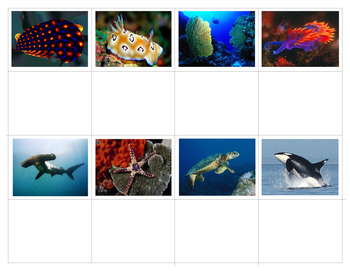 Ocean Life:  Mini Match-up Cards