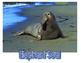 Ocean: Mammals Fact Cards