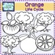 Orange Life cycle Clip Art {Science clipart}