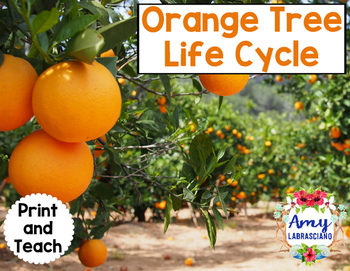 OrangeTree Life Cycle Reading Passage