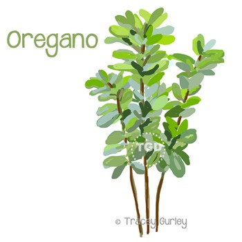 Oregano - oregano clip art, oregano Printable Tracey Gurle