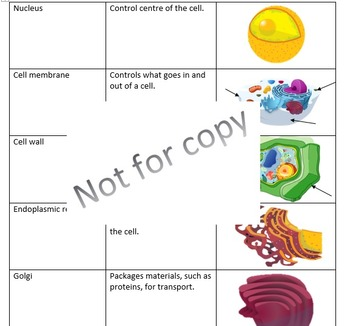 Organelle - Mix and Match