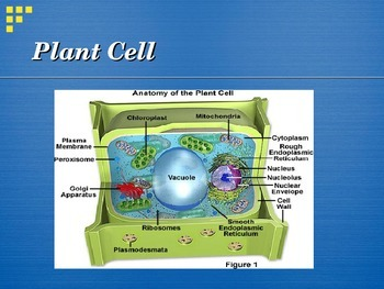 Organelles PowerPoint and Chart